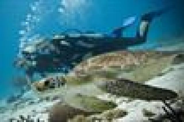 Bahia en Diving
